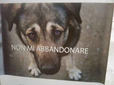 vegan fest 2011   camaiore 20110427 1819795682 960x300 - VEGAN FEST 2011- 22/25 APRILE - CAMARIORE