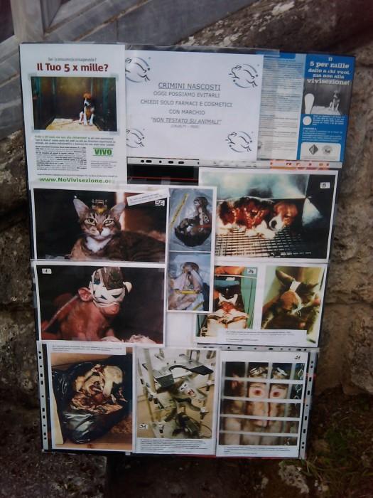 vegan fest 2011   camaiore 20110427 1839529371 - VEGAN FEST 2011- 22/25 APRILE - CAMARIORE
