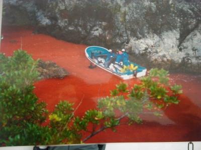 vegan fest 2011   camaiore 20110427 1841474425 960x300 - VEGAN FEST 2011- 22/25 APRILE - CAMARIORE
