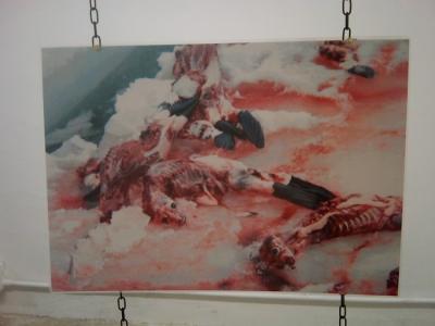 vegan fest 2011   camaiore 20110427 1897546423 960x300 - VEGAN FEST 2011- 22/25 APRILE - CAMARIORE