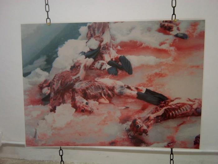 vegan fest 2011   camaiore 20110427 1897546423 - VEGAN FEST 2011- 22/25 APRILE - CAMARIORE