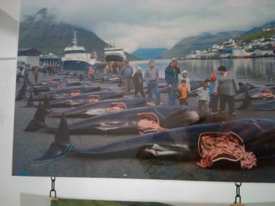 vegan fest 2011   camaiore 20110427 1951181832 960x300 - VEGAN FEST 2011- 22/25 APRILE - CAMARIORE