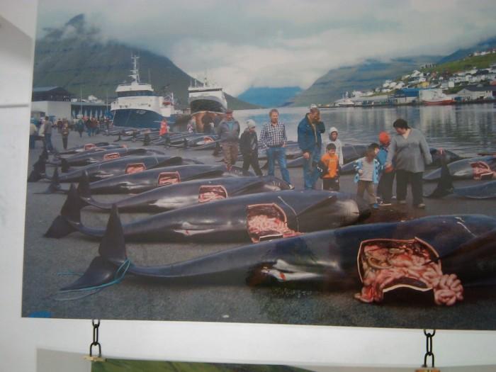 vegan fest 2011   camaiore 20110427 1951181832 - VEGAN FEST 2011- 22/25 APRILE - CAMARIORE