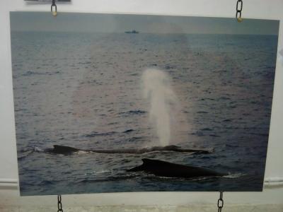 vegan fest 2011   camaiore 20110427 1959503561 960x300 - VEGAN FEST 2011- 22/25 APRILE - CAMARIORE