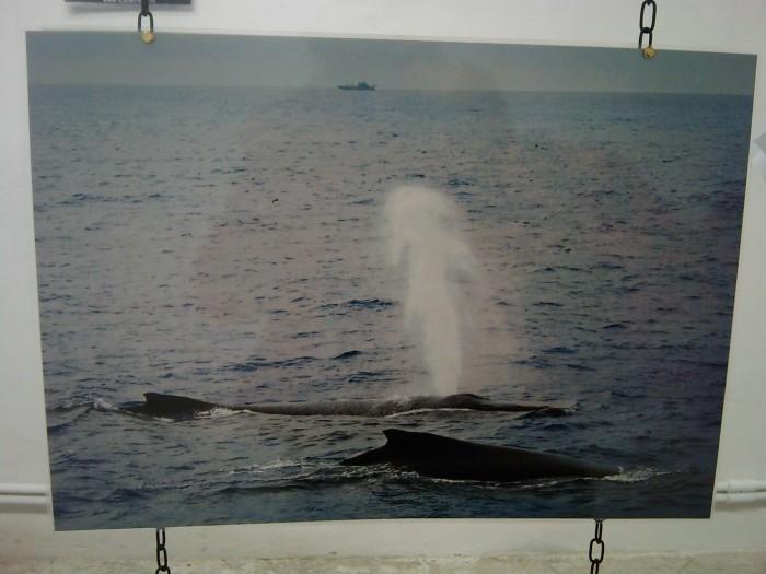 vegan fest 2011   camaiore 20110427 1959503561 - VEGAN FEST 2011- 22/25 APRILE - CAMARIORE