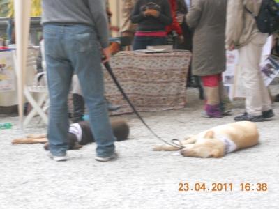 vegan fest 2011   camaiore 20110427 2024545389 960x300 - VEGAN FEST 2011- 22/25 APRILE - CAMARIORE