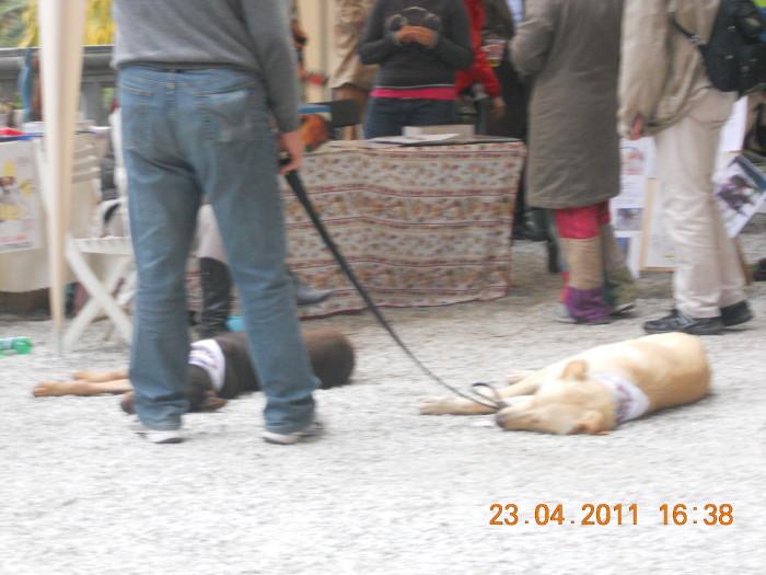 vegan fest 2011   camaiore 20110427 2024545389 - VEGAN FEST 2011- 22/25 APRILE - CAMARIORE