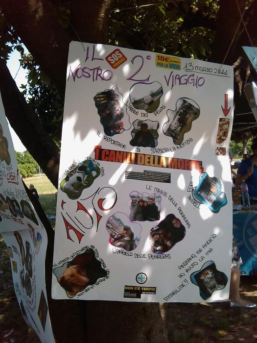 villaggio ve 20130212 1344792315 - TAVOLO ANIMALS ASIA - Giavera del Montello (TV) - 22 maggio - 2011-