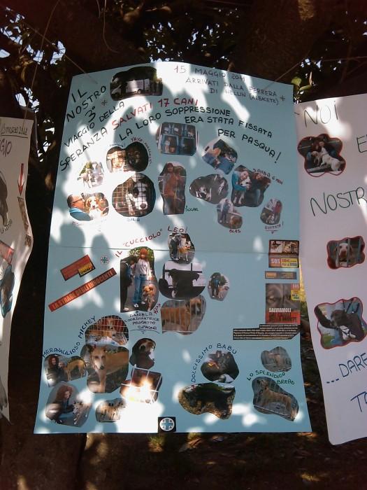 villaggio ve 20130212 1346129835 - TAVOLO ANIMALS ASIA - Giavera del Montello (TV) - 22 maggio - 2011-