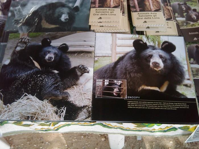 villaggio ve 20130212 1624745083 - TAVOLO ANIMALS ASIA - Giavera del Montello (TV) - 22 maggio - 2011-