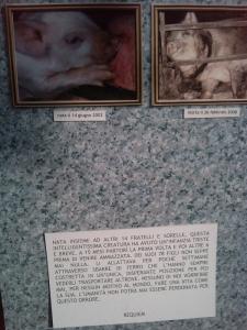 villaggio ve 20130212 1864284068 960x300 - TAVOLO ANIMALS ASIA - Giavera del Montello (TV) - 22 maggio - 2011-