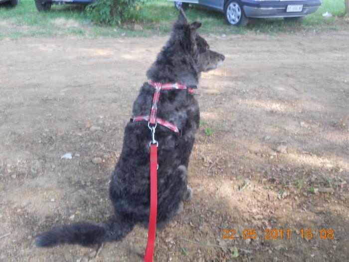 villaggio ve 20130212 2079876233 - TAVOLO ANIMALS ASIA - Giavera del Montello (TV) - 22 maggio - 2011-