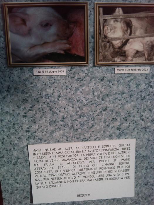 villaggio vegano 20110523 1055815442 - TAVOLO ANIMALS ASIA - Giavera del Montello (TV) - 22 maggio - 2011-