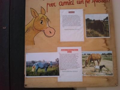 villaggio vegano 20110523 1293686163 960x300 - TAVOLO ANIMALS ASIA - Giavera del Montello (TV) - 22 maggio - 2011-