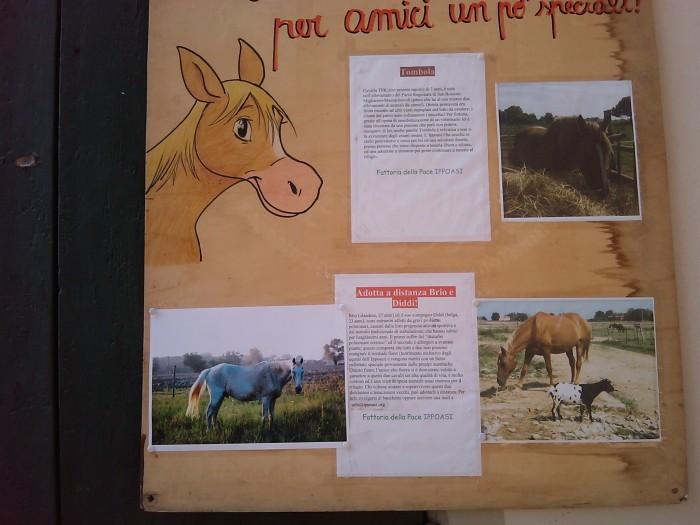 villaggio vegano 20110523 1293686163 - TAVOLO ANIMALS ASIA - Giavera del Montello (TV) - 22 maggio - 2011-