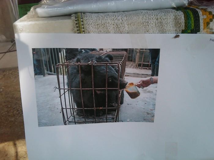 villaggio vegano 20110523 1854491676 - TAVOLO ANIMALS ASIA - Giavera del Montello (TV) - 22 maggio - 2011-