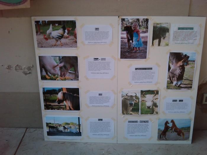 villaggio vegano 20110523 2092430256 - TAVOLO ANIMALS ASIA - Giavera del Montello (TV) - 22 maggio - 2011-