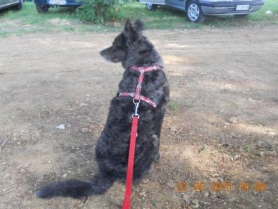 villaggio vegano 20110524 1594032092 960x300 - TAVOLO ANIMALS ASIA - Giavera del Montello (TV) - 22 maggio - 2011-