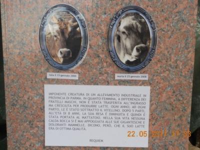 villaggio vegano 20110524 1917377114 960x300 - TAVOLO ANIMALS ASIA - Giavera del Montello (TV) - 22 maggio - 2011-