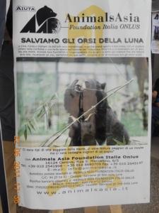villaggio vegano 20110524 1989431301 960x300 - TAVOLO ANIMALS ASIA - Giavera del Montello (TV) - 22 maggio - 2011-