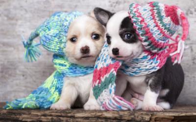 come curare il raffreddore del cane e1455317670283 400x250 1 - Come curare il raffreddore del cane