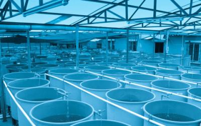 shutterstock 112830286 e1455884303132 400x250 - Acquacoltura: come vengono allevati i pesci che non sono pescati - ricette-vegane-dal-web-