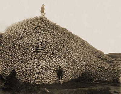 Bison_skull_pile-restored_a05b1abc0eda1fb339d62efd3f1f2375
