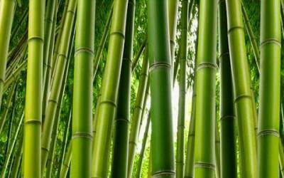 bamboo 400x250 - Fibra di bambù: proprietà e benefici