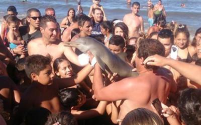 delfino selfie e1456483418407 400x250 1 - Un delfino e uno squalo morti per la smania di popolarità, che genera mostri di egoismo - ricette-vegane-dal-web-