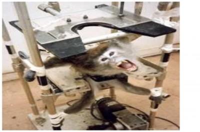 scimmia in laboratorio 2_93c87a327d9ca39e5053aa2e722ebd19