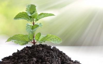 shutterstock 166834784 400x250 1 - Come coltivare menta in vaso e a terra
