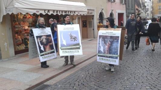 trento manifestazione pasqua difesa agnelli 1 1024x576 960x300 - Manifestazione a Trento in difesa degli agnelli a Pasqua 24-25-26 Marzo - 2016-