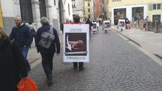 trento manifestazione pasqua difesa agnelli 2 1024x576 960x300 - Manifestazione a Trento in difesa degli agnelli a Pasqua 24-25-26 Marzo - 2016-