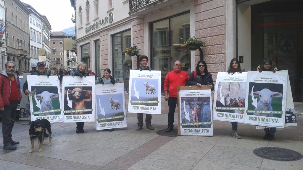trento manifestazione pasqua difesa agnelli 7 - Manifestazione a Trento in difesa degli agnelli a Pasqua 24-25-26 Marzo - 2016-