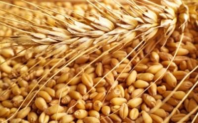 farina di kamut 2 400x250 - Farina di Kamut: cos'è e quali sono i benefici