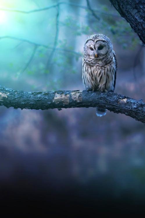 tumblr ng6ry9H6sL1tfeu62o1 500 1 - robert-dcosta:  Solitude || © ||