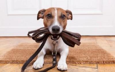 cane guinzaglio 400x250 1 - Come educare un cane: ecco le cose che un padrone non dovrebbe mai dire! - ricette-vegane-dal-web-