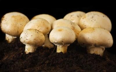 coltivare funghi casa 400x250 1 - Come coltivare funghi freschi in casa - ricette-vegane-dal-web-