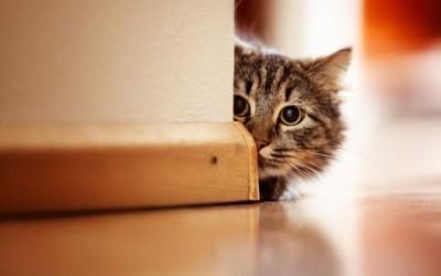 gatto e1446036953926 400x250 1 - I consigli pratici per i nostri giochi con gatti