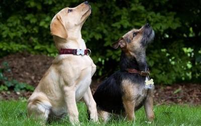 razze di cani 400x250 1 - Scopriamo le razze di cani più belli e interessanti