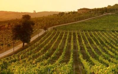 vigneti e1300990280967 400x250 1 - Vino biodinamico: che cos'è e quali sono le differenze dal vino biologico?