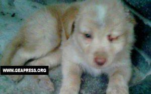 VIBO VALENTIA UN ALTRO CUCCIOLO NELLA SPAZZATURA 300x186 1 - Vibo Valentia: un altro cucciolo nella spazzatura