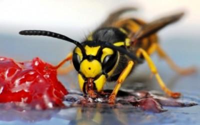 ape 400x250 1 - Puntura ape: rimedi naturali e cosa fare