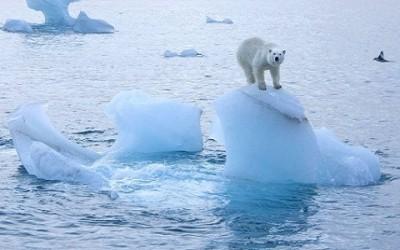ghiaccio artico orso bianco 400x250 1 - Nasce la prima biblioteca dei ghiacci - ricette-vegane-dal-web-