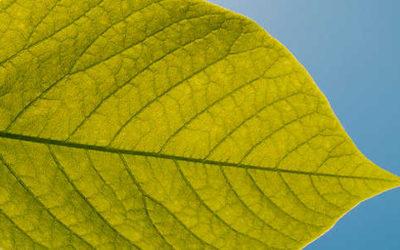 bionic leaf 400x250 1 - Combustibile da acqua e idrogeno grazie all'energia solare: diciamo addio al petrolio… - ricette-vegane-dal-web-
