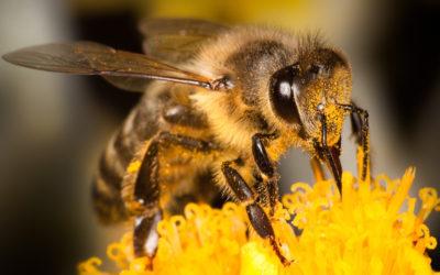 puntura di vespa1 400x250 1 - Puntura di vespa: rimedi e cure naturali