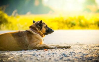 shutterstock 394876498 e1468344561953 400x250 1 - Non solo cani e gatti ma anche criceti e tartarughe abbandonati in estate