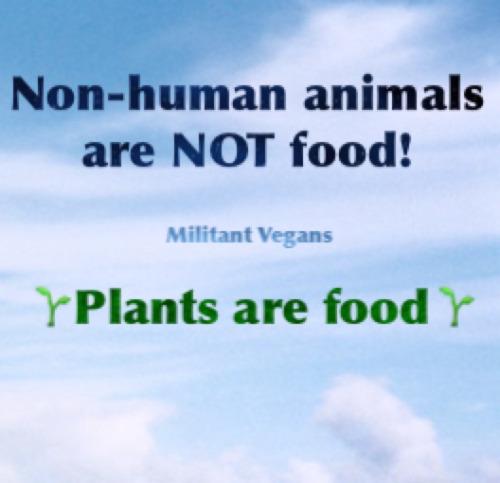 tumblr oc4jhlO6yU1tqolo9o1 500 1 - ▶️▶️▶️ www.vegansociety.com