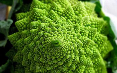 5377969184 d9ca39ca21 e1470566839170 400x250 1 - Cavolo romano: proprietà, benefici e ricette - ricette-vegane-dal-web-