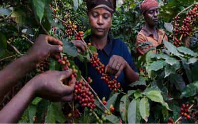 caffè 400x250 1 - Coi cambiamenti climatici rischiamo di perdere metà delle piantagioni di caffè - ricette-vegane-dal-web-